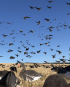 Scottish Waterfowl Short Stay – 3 Days Hunting